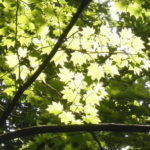 7bce3f1d s 150x150 - 札幌市内観光 ~また円山登ってきた!~