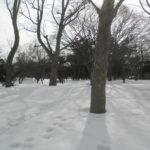 a74bb302 s 150x150 - 札幌市内観光 ~月寒公園~
