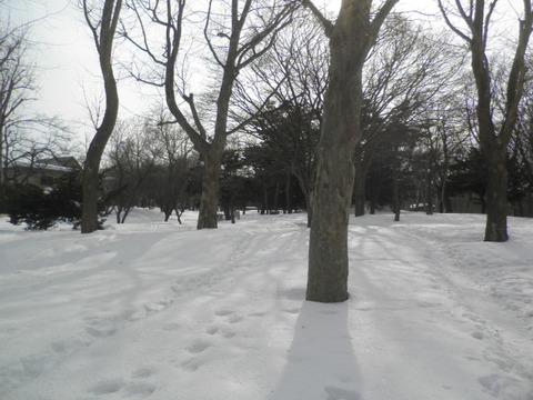 a74bb302 s - 札幌市内観光 ~月寒公園~
