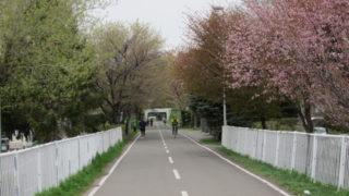 71356429 s 320x180 - 北海道の春の生活25 ~桜 / 円山公園 / 花見~