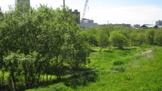 a8f63aca s 320x180 - 札幌市内観光 ~野幌森林公園 開拓記念塔~