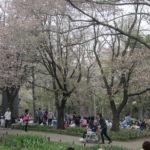 5ebaebb5 s 150x150 - 円山公園の花見2013