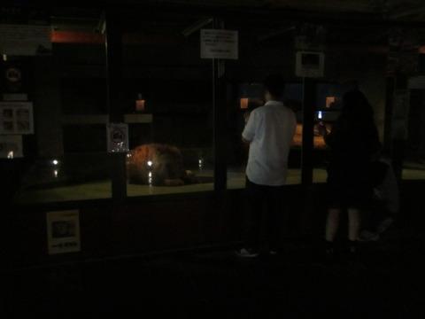 8ffe90ba s - 円山動物園 / 夜の動物園