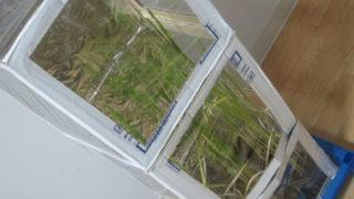 22411e36 s 320x180 - 自給自足的生活の準備26 ~稲の育成に大事なのは温度 / 大豆収穫しました~