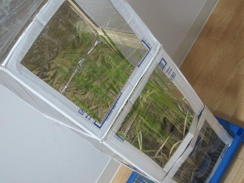 22411e36 s - 自給自足的生活の準備26 ~稲の育成に大事なのは温度 / 大豆収穫しました~