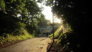 IMG 0058 320x180 - 道端で見かけたキノコとか木の実 / 休日のお散歩Part03