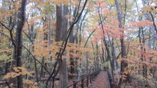 IMG 0094 320x180 - 北野たかくら緑地 / 休日のお散歩Part07