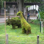 IMG 0032 150x150 - 円山動物園のアフリカゾーン見てきました