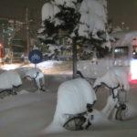 IMG 0007 150x150 - 今年の札幌は雪が降るのが随分遅かったように思います