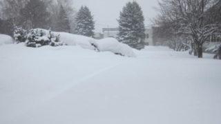 IMG 0049 320x180 - ちょっと雪の多い日に雪遊びしてみた / モミの木の下っていいですね
