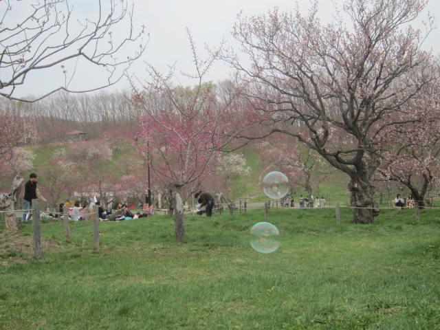 IMG 0099 - 平岡公園梅林祭りの梅ソフトクリームと梅シューアイス