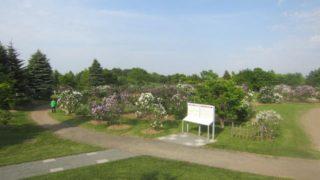 IMG 0022 320x180 - 川下公園のライラック祭りで野原でしゃぼん玉遊び