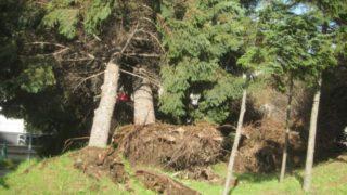 IMG 0016 320x180 - 北海道地震前日の様子というか台風21号の爪痕【2018全道停電録Part01】