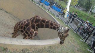 IMG 0085 320x180 - 旭山動物園のザンギカレーと動物やら何やら