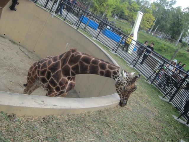 IMG 0085 - 旭山動物園のザンギカレーと動物やら何やら