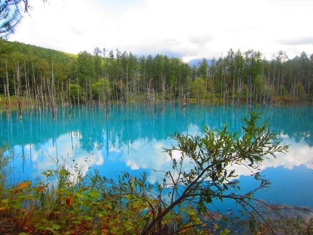 IMG 0094 - 美瑛の青い池がそこかしこ工事されて整備されてました