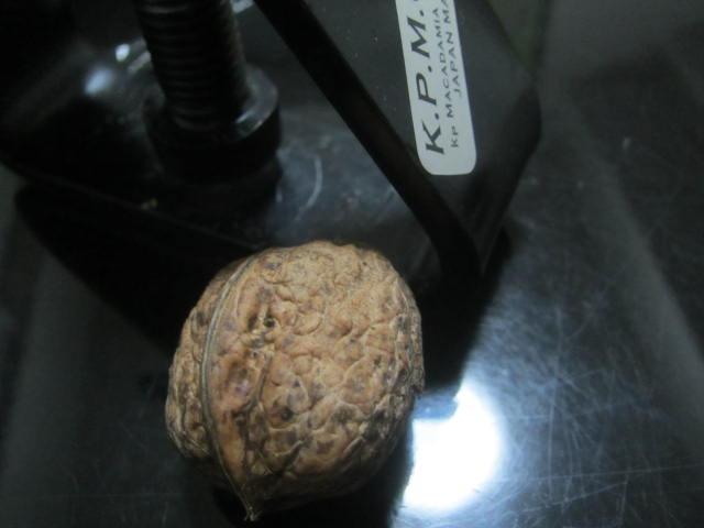 IMG 0016 - 貰いモノの転がってたクルミを割って食べてみた感想