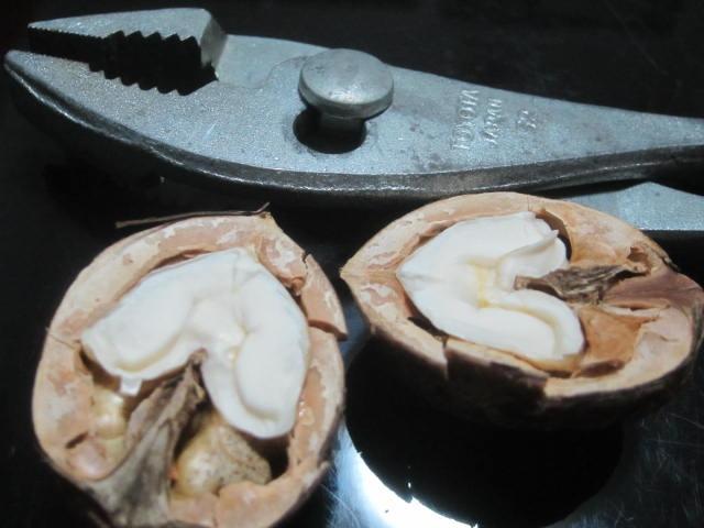 IMG 0018 - 貰いモノの転がってたクルミを割って食べてみた感想