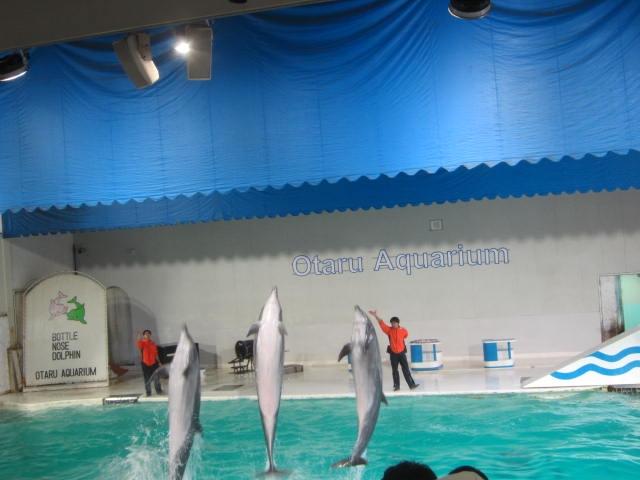 IMG 0192 - 小樽水族館のペンギンショーがめっちゃ可愛かった