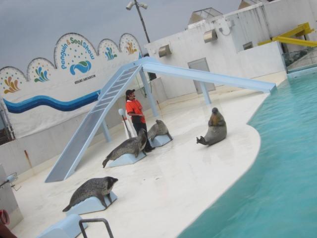IMG 0197 - 小樽水族館のペンギンショーがめっちゃ可愛かった