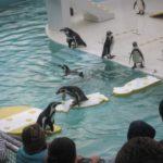 IMG 0198 150x150 - 小樽水族館のペンギンショーがめっちゃ可愛かった