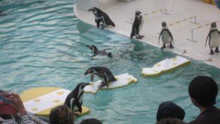 IMG 0198 320x180 - 小樽水族館のペンギンショーがめっちゃ可愛かった