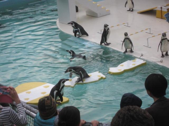 IMG 0198 - 小樽水族館のペンギンショーがめっちゃ可愛かった