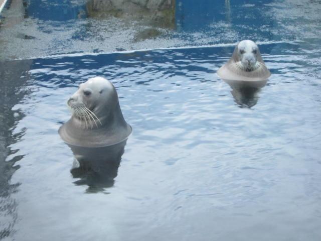 IMG 0200 - 小樽水族館のペンギンショーがめっちゃ可愛かった
