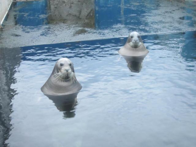 IMG 0201 - 小樽水族館のペンギンショーがめっちゃ可愛かった