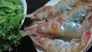 IMG 0001 320x180 - でっかいボタン海老と葉っぱなサラダに卵かけご飯