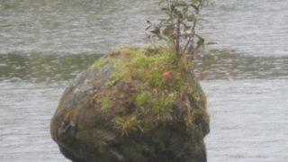 IMG 0050 320x180 - 札幌発の函館バスツアー行って来たPart01 雨の中での大沼湖遊覧と散歩