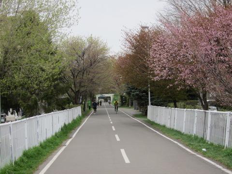 北海道の春の生活25 ~桜 / 円山公園 / 花見~