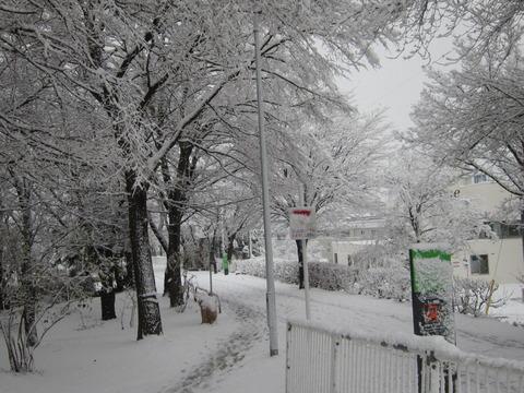 根付くかは謎ですが、ドカっと雪降りました