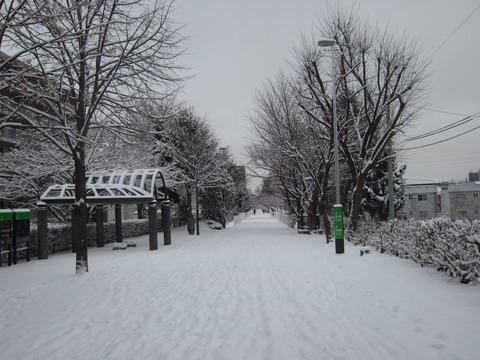 今日はちょっとばかり吹雪いてて大変でした