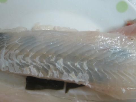 IMG 0111 480x360 - ヒラメの捌き方 / ヒラメを昆布〆してキモ和えで頂きます