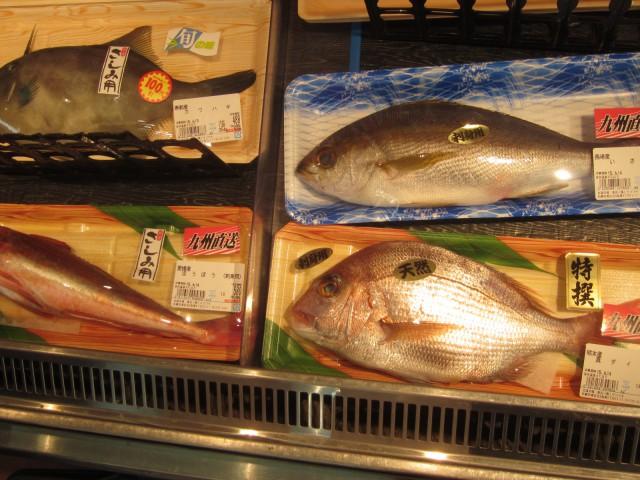 IMG 0015 640x480 - イサキとカワハギと天然の真鯛