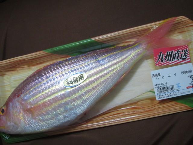 IMG 0034 640x480 - 今晩のお魚さんはイトヨリダイ!