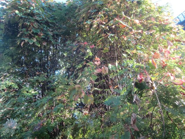 IMG 0056 640x480 - 道端で見かけたキノコとか木の実 / 休日のお散歩Part03