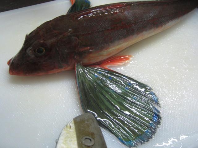 IMG 0066 640x480 - カナガシラの捌き方 / ルーシーコープで小樽の海産祭りやってた