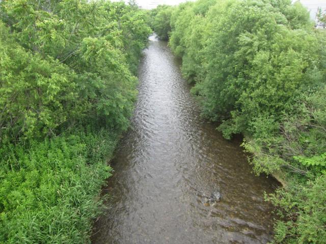 IMG 0011 640x480 - 川辺にある雪捨て場だった場所の草の成長率が異常
