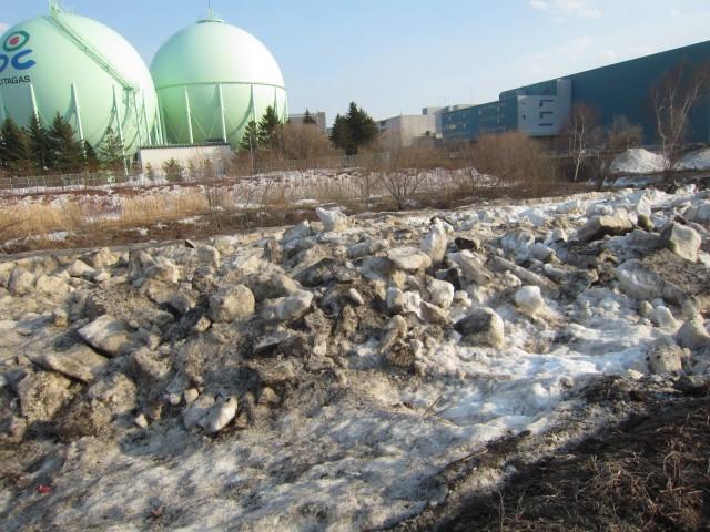 IMG 0013 640x480 - 川辺にある雪捨て場だった場所の草の成長率が異常