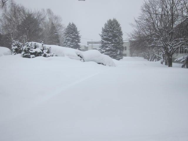 IMG 0049 - ちょっと雪の多い日に雪遊びしてみた / モミの木の下っていいですね