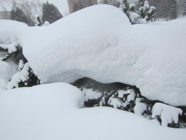IMG 0053 - ちょっと雪の多い日に雪遊びしてみた / モミの木の下っていいですね