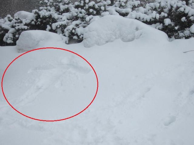IMG 0054a - ちょっと雪の多い日に雪遊びしてみた / モミの木の下っていいですね