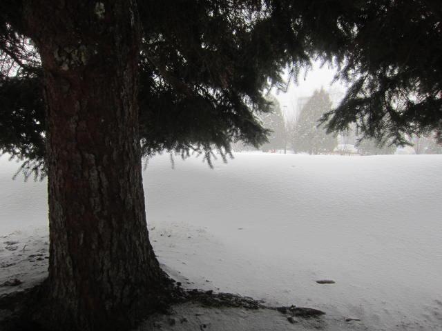 IMG 0055 - ちょっと雪の多い日に雪遊びしてみた / モミの木の下っていいですね