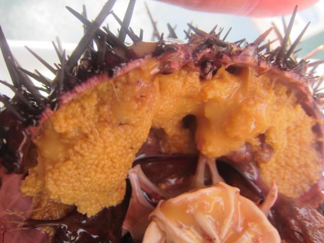 IMG 0033 - 殻ごとの海栗焼きと蝦夷アワビ食べてきました / さっぽろオータムフェスト2017海鮮編