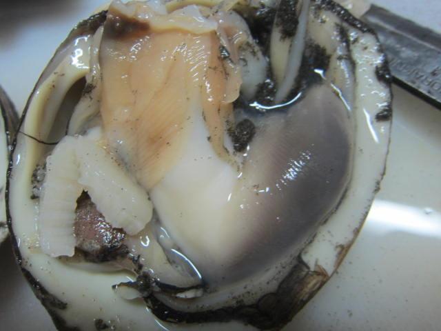 IMG 0012 - 北寄貝(ホッキガイ)を買ってきて家で捌いて食べてみた