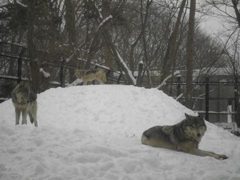 031804b3 s - 札幌市内観光 ~冬の円山動物園~