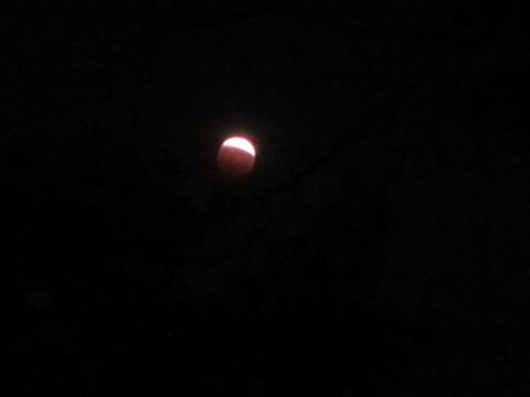 11b6ec7d s - 北大の敷地で月食を見てきた