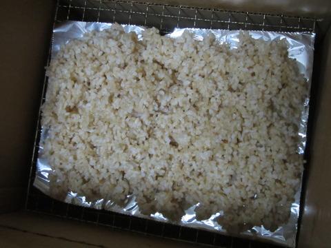 12ff5e45 s - 糒の作り方中編 まずは炊いた玄米を干してみます